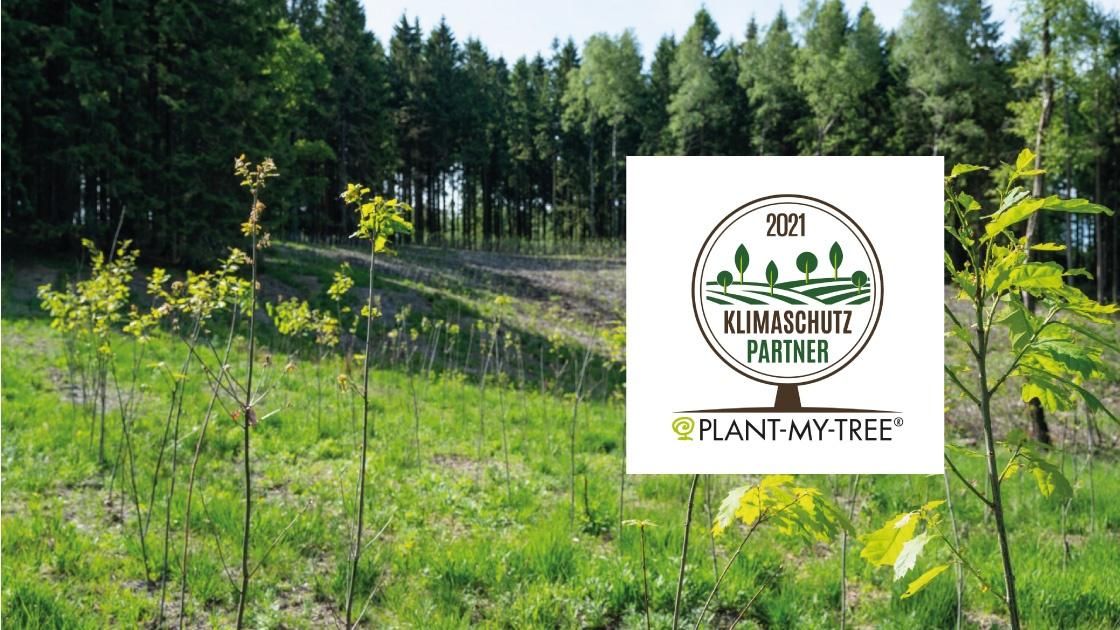 """Featured image for """"Auf dem Weg zur Klimaneutralität – Akkurat pflanzt Bäume"""""""